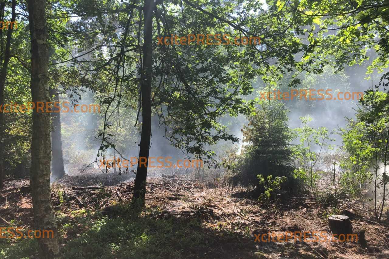 2500 Quadratmeter Waldboden in Brand: Feuerwehr löscht mit Großaufgebot im Waldgebiet